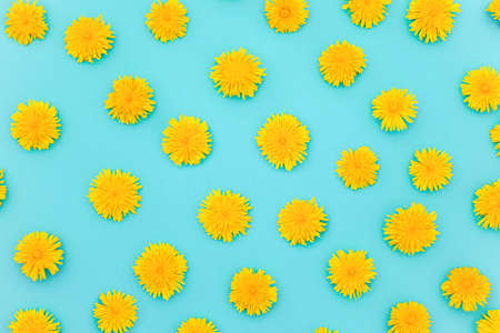 Pattern of yellow dandelions on blue background, as a backdrop or texture. Spring, summer wallpaper for your design. Top view Flat lay.