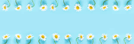 Banner made from row of white chamomiles daisies flowers on pastel blue color paper background. Copy space Template for text or your design Flat lay Top view.