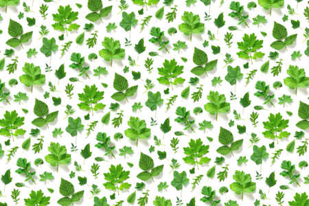 Pattern of various natural green leaves on a white background, as a backdrop or texture. Spring, summer wallpaper for your design. Top view Flat lay. Banco de Imagens