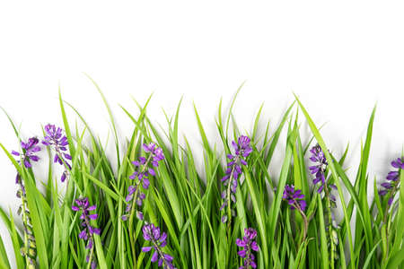 Border made with green grass and purple flowers on white background. Concept Spring or Summer backdrop. Template for design, greeting card, invitation, postcard Flat Lay Top view Copy space. Stock fotó