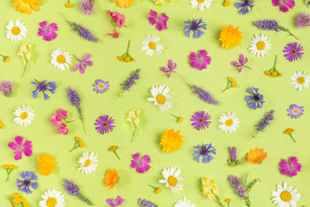 Pattern of colorful wild flowers on a green background, as a backdrop or texture. Spring, summer wallpaper for your design. Top view Flat lay.