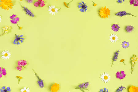 Frame from natural colorful wild flowers on a green background with copy space. Spring, summer boarder for your design. Top view Flat lay.