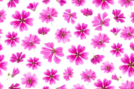 Seamless pattern of pink flowers on a white background, as a backdrop or texture. Spring, summer wallpaper for your design. Top view Flat lay.