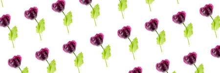 Banner made with natural poppy flowers on a white background, as a backdrop or texture. Summer wallpaper for your design. Top view Flat lay.