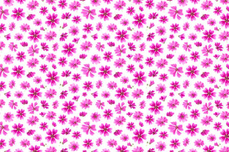 Pattern of pink flowers on a white background, as a backdrop or texture. Spring, summer wallpaper for your design. Top view Flat lay.