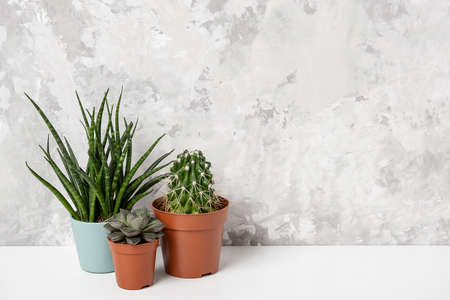 Home plants. Succulents and cactus in brown pots on table against stone wall. Close-up, Front view.
