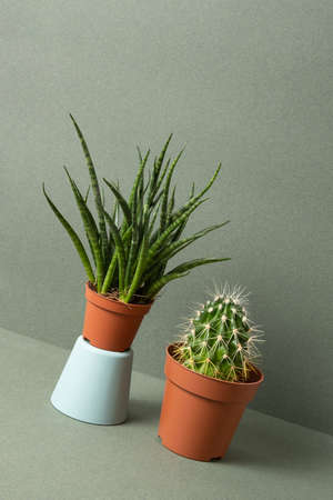 Home plants. Succulent and cactus in brown pots on green background.