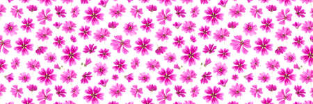Banner made with pink flowers on a white background, as a backdrop or texture. Spring, summer wallpaper for your design. Top view Flat lay.