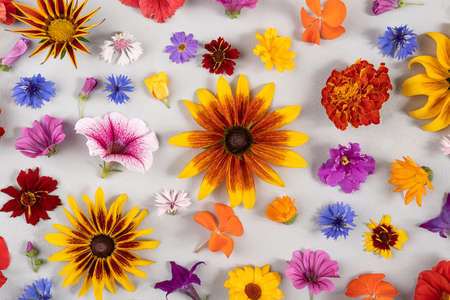 Colorful flower pattern. Multicolor natural flowers on gray background. Template for your design Top view Flat Lay.