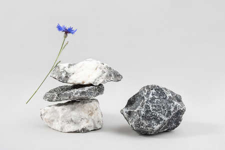 Creative podiums for cosmetics or you merchandise, products. Layout made of from a pile of balancing stones and blue cornflower flower on gray background. Front view.
