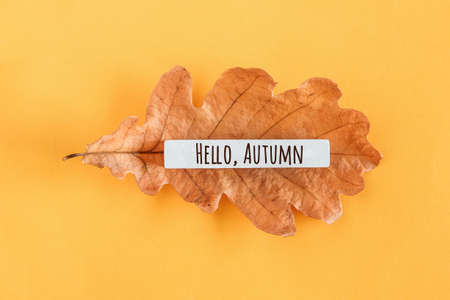 Hello autumn text and oak leaf on yellow background. Top view Flat lay Minimal style. Concept Welcome Fall. Greeting card.