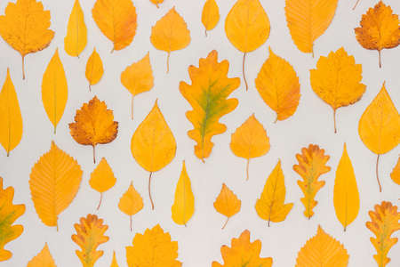 Autumn yellow leaves on gray background, fall wallpaper. Top view Flat lay.