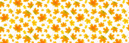 Banner made with natural orange autumn leaves on a white background, as a backdrop or texture. Fall wallpaper for your design. Top view Flat lay.