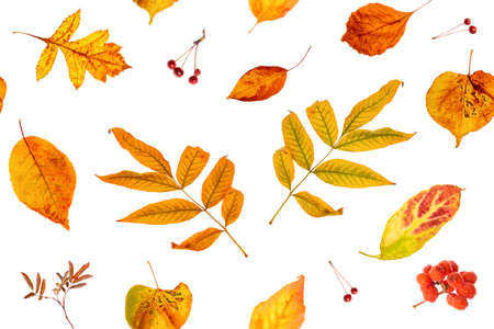 Seamless pattern of natural autumn leaves on a white background, as a backdrop or texture. Fall wallpaper for your design. Top view Flat lay. Stock fotó