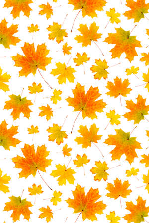 Pattern of natural orange autumn leaves on a white background, as a backdrop or texture. Fall wallpaper for your design. Top view Flat lay.
