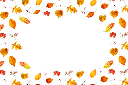 Fall frame made with natural autumn leaves and berry on white background with copy space, as backdrop or texture. Top view Flat lay.