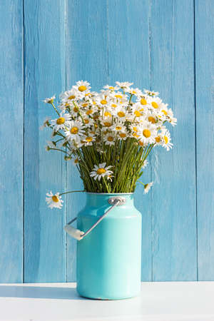 Bouquet of field chamomile flowers in starm tin can vase on background blue wooden boards. Template for postcard. Concept Women's day, Mothers Day, Hello summer or Hello spring.