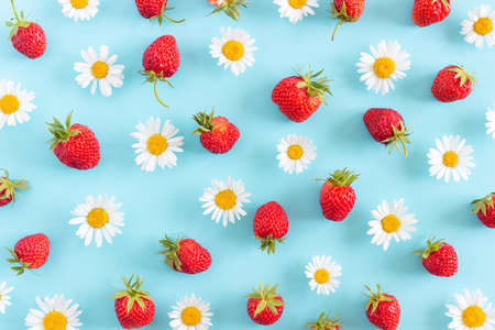 Bright summer background made with natural chamomile flowers and strawberry on blue. Summertime wallpaper. Top view Flat lay.