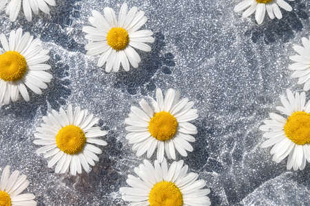 Summer background. Natural chamomile flowers and wave water on shining gray background. Top view Flat lay.