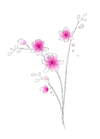 pink orchid: Watercolor orchid vector sketch Illustration