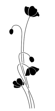 flower white: Abstract black poppy on white background