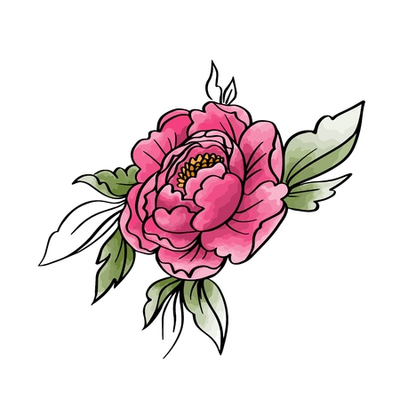 Garden peony. Watercolor, hand painted, isolated on white background. Vector illustration