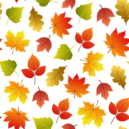 Vector seamless pattern with autumn leaves on white.