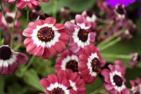 Bouquet of decorative flowers