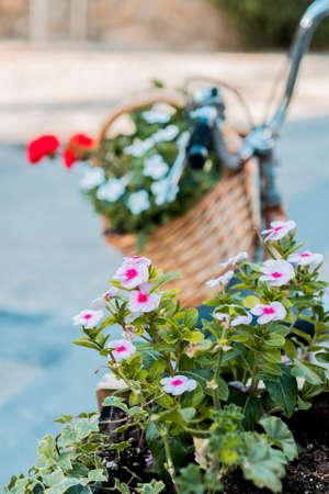plowing: flower bike