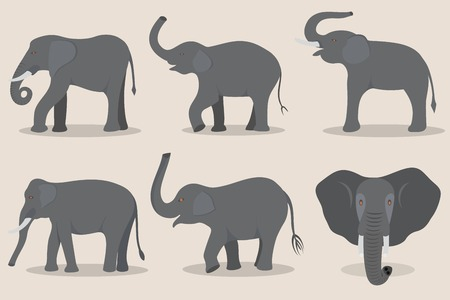Gray elephant set isolated on a beige background