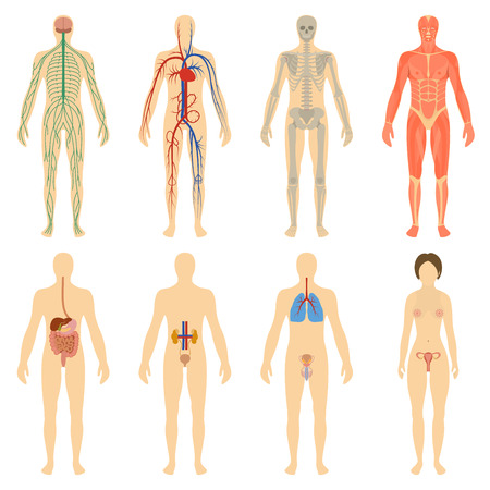 nervous: Set of human organs and systems of the body vitality. Vector illustration