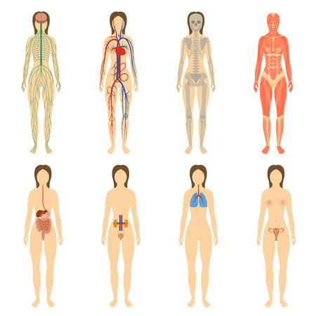 corpo umano: Set di organi e sistemi del corpo vitalità umana. Illustrazione vettoriale