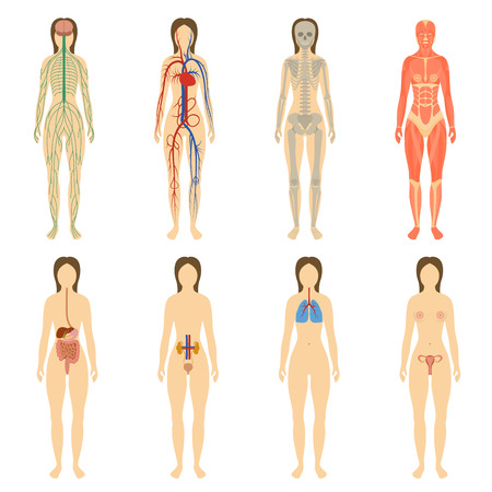 Set van menselijke organen en systemen van het lichaam vitaliteit. Vector illustratie