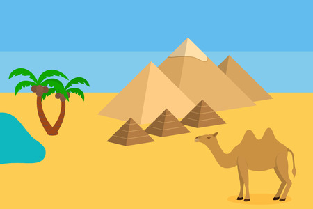 sahara desert: Camel in the Sahara desert with the pyramids and palm trees