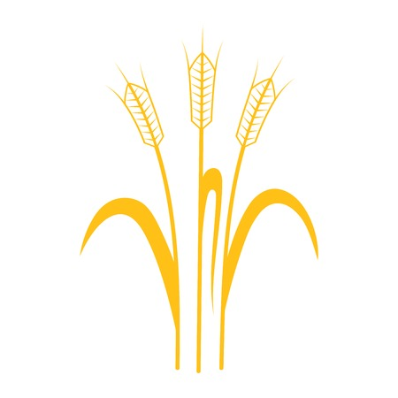 sheaf: Ears of Wheat, Barley or Rye vector visual graphic icons, ideal for bread packaging, beer labels etc