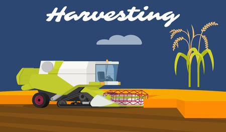 harvesting rice: Modern combine harvester tractor working a rice field. Agriculture machinery. Agriculture crop harvest. Vector illustration. Illustration
