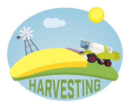 harvester: Combine harvester on a wheat field against sun. Farm rural landscape