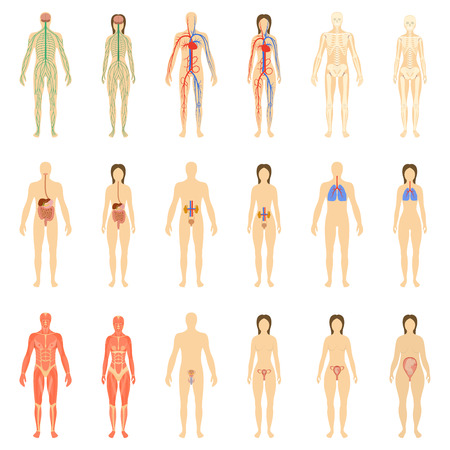 Set of human organs and systems of the body vitality. illustration.