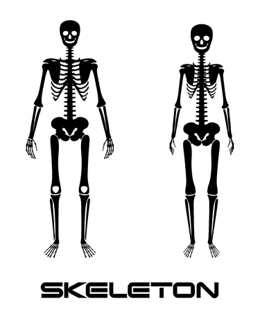 sternum: Male and female skeleton - silhouettes Illustration