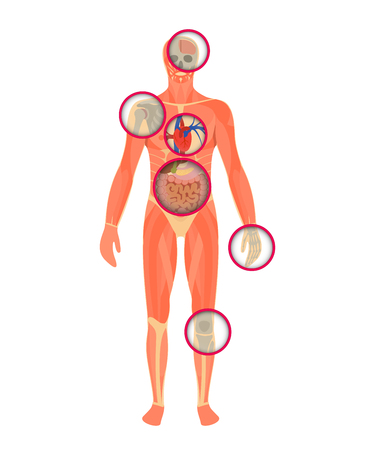 the structure of human body - a look through the scanner. Anatomy of male. Vector illustration Illustration