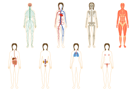 vitality: Set of human organs and systems of the body vitality. Vector illustration
