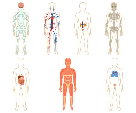 respiration: Set of human organs and systems of the body vitality. Vector illustration.