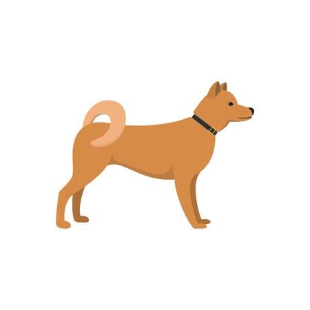 akita: Akita Inu - dog asian breed on white background. Vector illustration