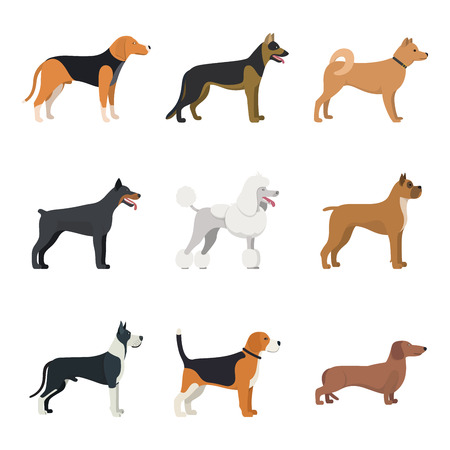 Different type of dogs breed set with Beagle, German shepherd, Akita Inu, Doberman, Poodle, Boxer, Great Dane and Dachshund. isolated vector set