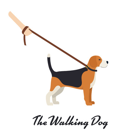 beagle terrier: Beagle Dog with a leash - Vector color serious dog Beagle breed on the walk Illustration