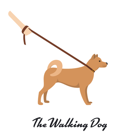 akita: Akita Inu with a leash - dog asian breed on white background. Vector illustration
