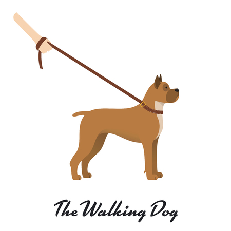Dog boxer with a leash - on white background. Vector illustration Illustration