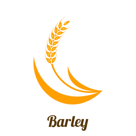 Wheat barley spike yellow isolated on white background. Grain plant silhouette. Spica icon. Ear organic. Vector illustration flat design. Cereals natural. Maybe as a logo. Illustration
