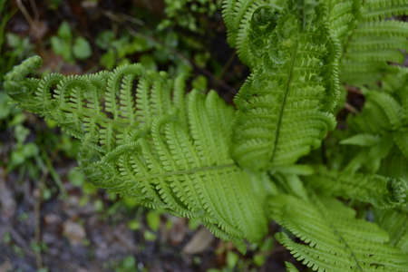Beautiful fern leaves in the forest. Banco de Imagens