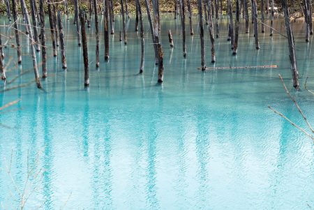 Blue Pond (Aoiike) ,Biei Hokkaido Japan , April 2016 Banco de Imagens